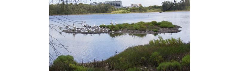 Wetland training in managing mangrove, saltmarsh, mosquitoes and migratory shorebird habitats in complex wetlands